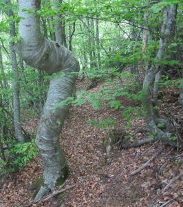Reptation_arbre